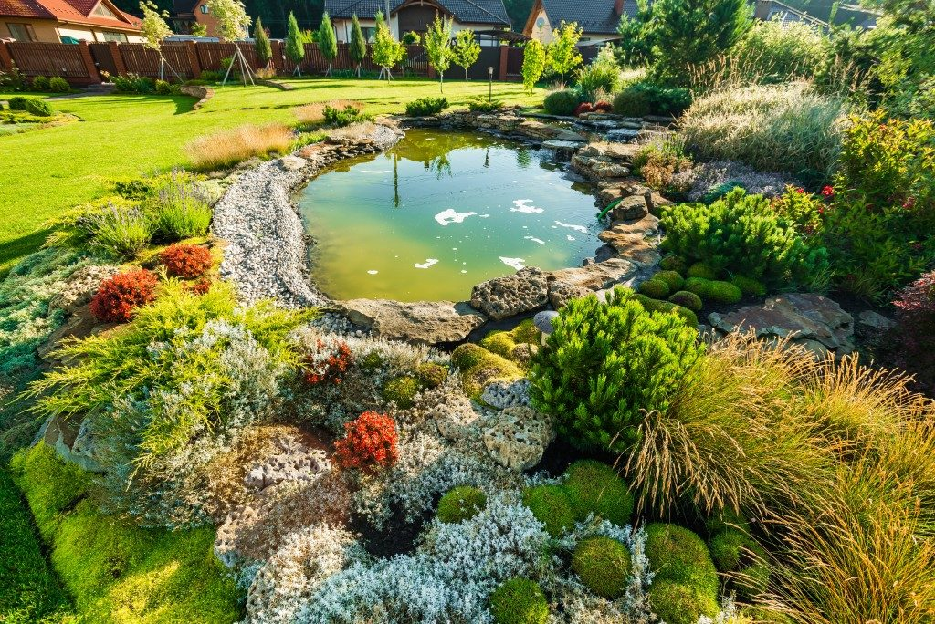 small lagoon in a garden